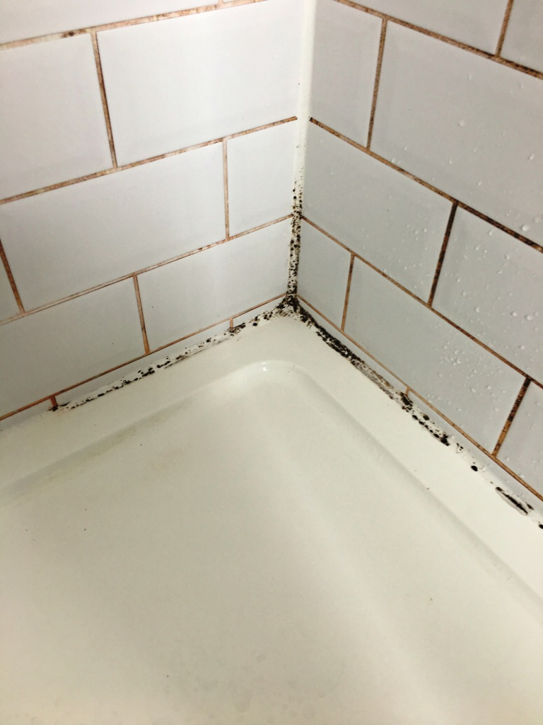 Shower Room Tiles Before Grout Colouring in Hove